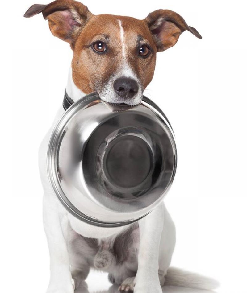 Hondenvoerbakkenactie